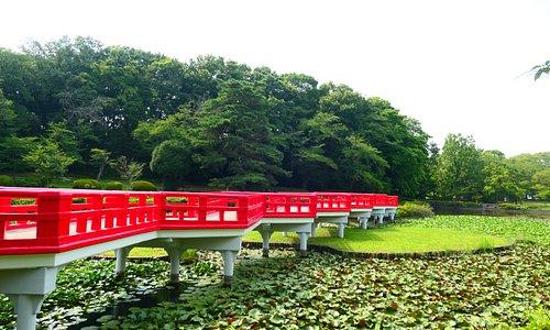 八つ橋と沼。城とは関係ないですが良かったです。
