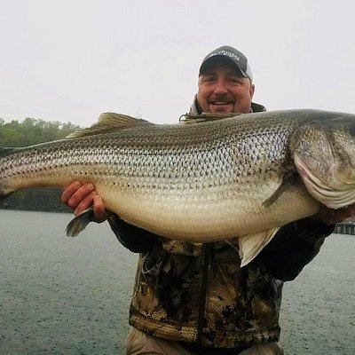 A catch of a lifetime! 61# striper