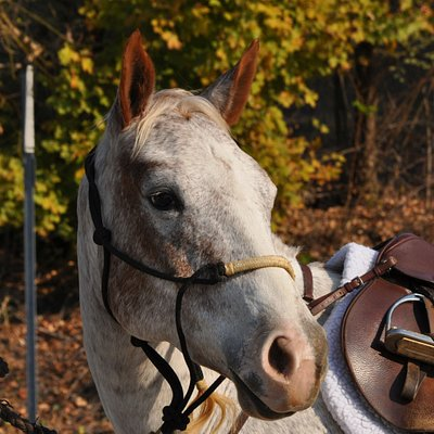 In Elkmont you can rest you horses and visit Belle Chevre Goat Cheese tasting room.