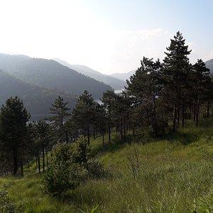 i boschi sopra i laghi del gorzente