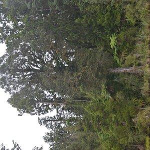 Okarito State Forest