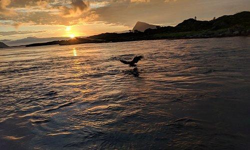 Midnight sun eagle!