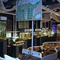 New year, new species, new tanks! Come check out our brand new touch tank!