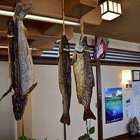店内 鮭とばが一匹まんま吊るしてあって珍しい。