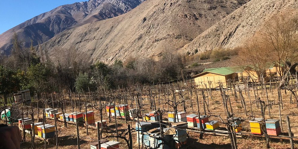 Productora de la mejor miel de la región