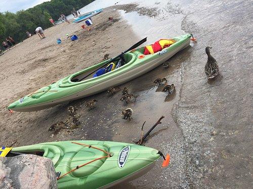 Beautiful minets point, goselings, geese, boats, kayaks, kids swimmer, playground, washroom,