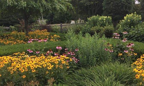 Summer perennials are at their peak!