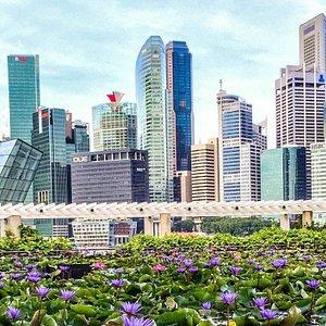 Singapore, Garden in the City