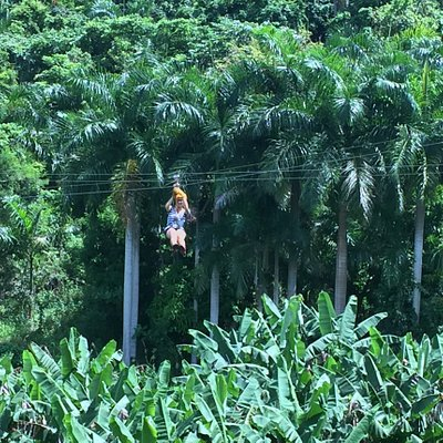The rainforest is the best place to experience ziplining in Puerto Rico.
