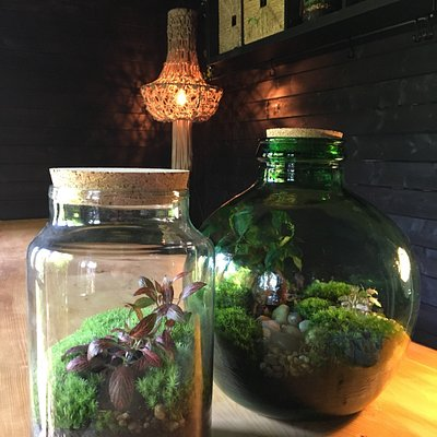 Get creative with one of our Macrame or Terrarium workshops!