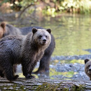 Cubs Rocky & Mo-Mo with mama in the back
