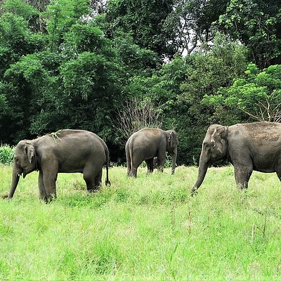 A safe and natural environment for the elephants to roam free in their natural habitat.