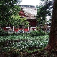 池の向こうは三神合祭殿