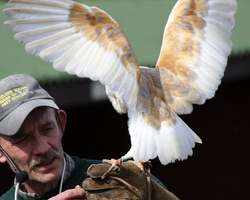 Ray with a beautiful Barn Owl