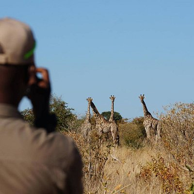 Experiencing the respectful, yet close up intimacy with the African wildlife on walking Safari.