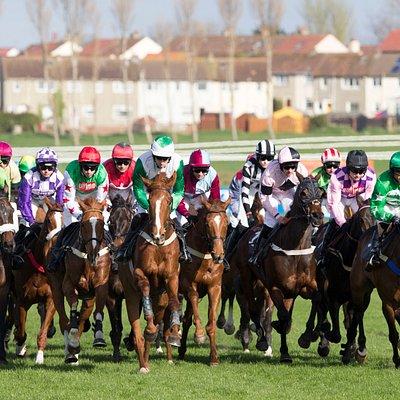 Races at Ayr Racecourse
