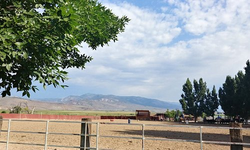 Paddock for Horses, Cattle
