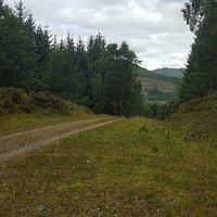 Acharn Forest Walk