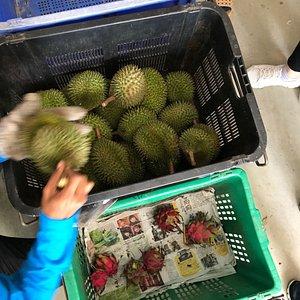 Zhong Cheng Durian Farm