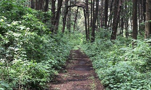 Mystical path trough the jungles