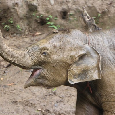 6 months old Baby Elephant.