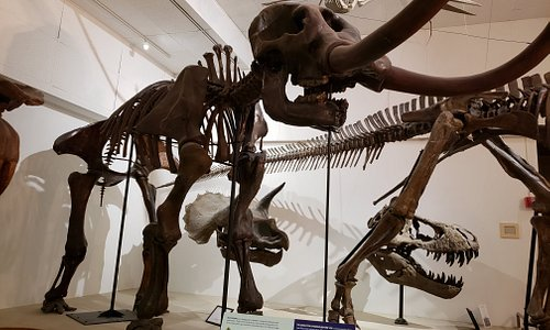 Mastodon made up of bones of two Wisconsin Mastodons