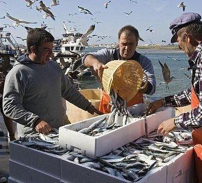 El puerto de Isla Cristina concentra una de las mayores flotas de pesca litoral de España