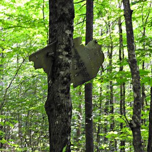 B-52 parts in the trees
