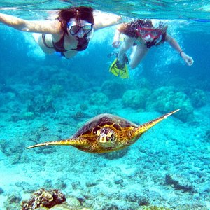 Snorkeling-The Underwater World