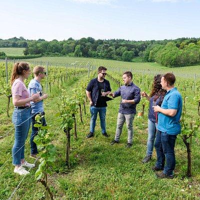 Wine tasting at Albury Organic Vineyard