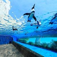 世界初の展示方法、都会の空を飛ぶように泳ぐ「天空のペンギン」