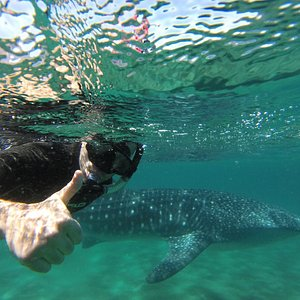 The ultimate whale shark picture