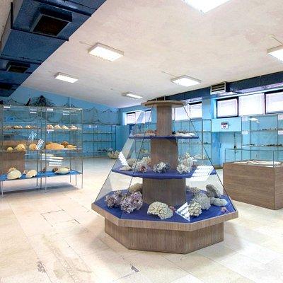 "Exhibition ""Malacological collection"""