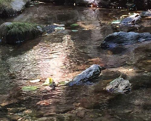 Cascate delle libellule azzurre