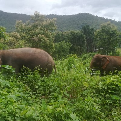 Elephant sanctuary care Park