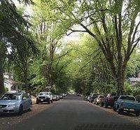 Tree lined Elliott Avenue heading towards Ladd Circle.