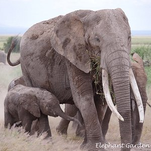 Up close with the elephants