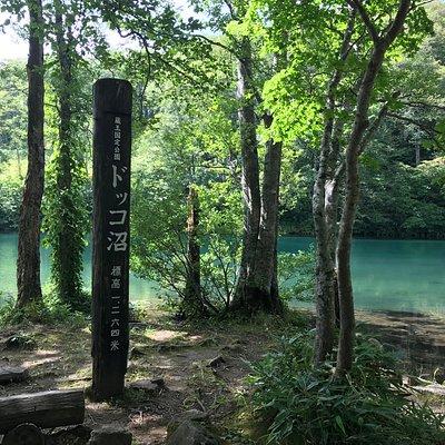 ドッコ沼湖畔