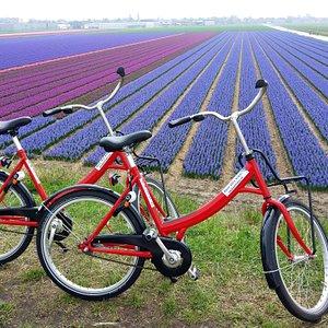 Met de deelfiets bij de bloembollenvelden