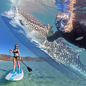 Swim with whale-sharks, paddleboard and snorkel with sea-lions all in one day!