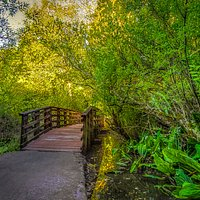 Scriber Lake Trail bridge in Lynnwood, WA