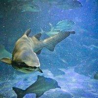 Se apaixone pelo fundo do mar!