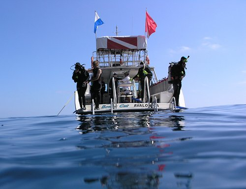 The Scuba Cat is available for half and full day dive trips