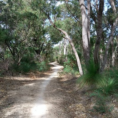 A beautiful peaceful walk through the bush
