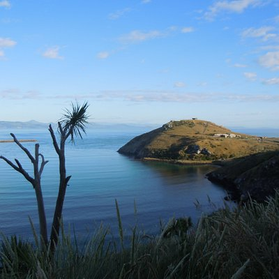 A view out to Pukekura, Taiaroa Head