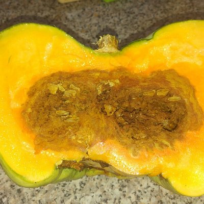 Rotten pumpkin from the market!!!