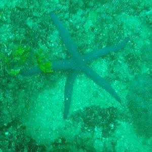 Etoile de mer bleue nuit, plusieurs variétés de poissons