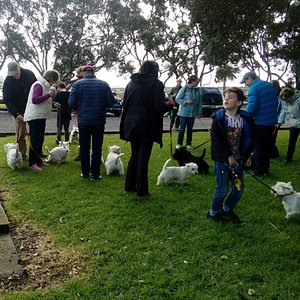 West Highland and Scottish Terrier club, one of the many groups who meet to walk Kiwi Esplanade