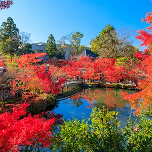 You can also enjoy the beautiful autumn leaves in Japan, not only sakura! #autumn