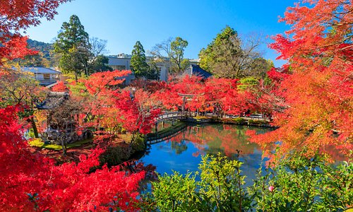 You can also enjoy the beautiful autumn leaves in Japan, not only sakura!